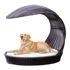 fun beds for pets - Google Search