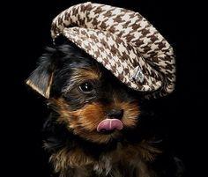 OMG too adorable