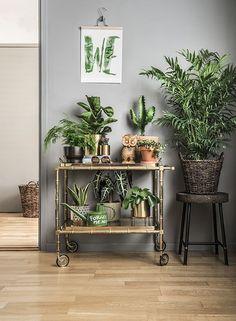 Kaktusar är tåliga och lättskötta