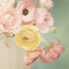 Pastel ranunculus combined with closed light pink peony & lace. Graphisches Design, Colorful Roses, Pastel Flowers, Ranunculus Flowers, Anemones, Cream Flowers, Yellow Flowers, Spring Flowers, Pretty Pastel