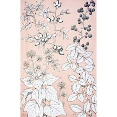 Leaves And Flowers From Nature No 6 Plate Xcvi From The Grammar Of Ornament By Owen Jones Published By Day & Son London 1865 Canvas Art - Ken Welsh Design Pics (22 x 36)