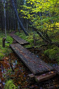Simple wood bridge in the forest Beautiful Forest, Beautiful Scenery, Wonderful Places, Beautiful Places, Building Bridges, Sea Level Rise, Forest Path, Walking Paths, Garden Water