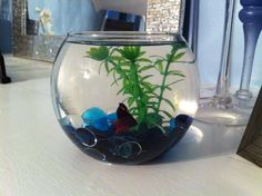 Betta need gallons, a place to hide, temperatures of degrees Fahrenheit, and a filter. This doesn't provide any of those. Betta Fish Bowl, Beta Fish, Water Plants, Aquariums, Growing Plants, Filter, Animal, Create, Mini