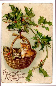kittens in a basket by raidensgrammie21, via Flickr
