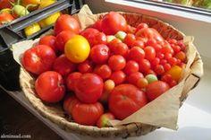 александров рецепт шарлотки с яблоками
