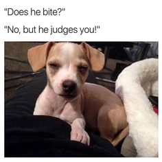 20 Dog Memes