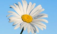 """HowStuffWorks """"Top 5 Perennials for the South"""""""