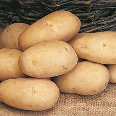 Seed Potatoes - Maris Piper - - View All Seed Potatoes - Seed Potatoes - Potatoes Onions Garlic - Gardening Potato Gardening, Planting Potatoes, Sutton Seeds, Fluffy Mashed Potatoes, Garlic Seeds, Potato Onion, Grow Kit, Edible Flowers, Planting Flowers