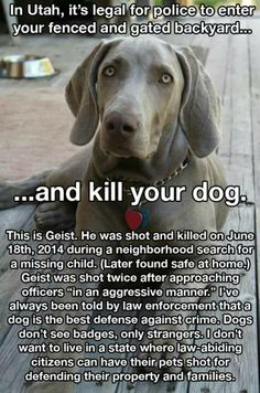 Salt Lake City Police shot a dog in a private, fenced, and gated backyard on June 18, 2014 when the police were searching for a missing child.
