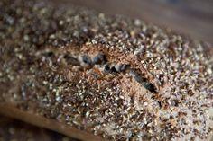 Celozrnný chléb bez hnětení Desserts, Food, Tailgate Desserts, Deserts, Essen, Postres, Meals, Dessert, Yemek