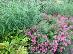 Monet's Garden exhibit— atThe New York Botanical Garden