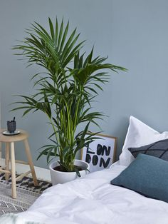 Grønne planter som f.eks arecapalme passer også fint på soverommet.