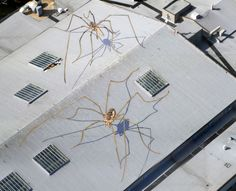 """Huge Daddy Longlegs """"Mural"""" on the Roof underneath the Seattle Space Needle (4 Pictures) > Design und so, Illustrationen, Paintings, Streetstyle > daddy longlegs, mural, roof, seattle"""