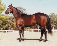 Leading racehorse sire Corona Cartel surpassed $50 million in progeny earnings