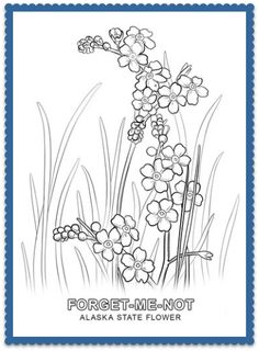 Alaska State Flower Detailed Coloring Pages Flower Coloring