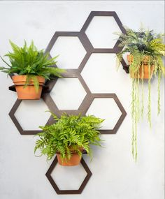 Hexagon Pot holder ,wall trellis can mounted easily on the wall with our cute little brackets . You can move your pots around on the frame or move the frame around on the brackets to accommodate a growing creeper Corten steel finish Wall Mounted Plant Holder, Wall Mounted Planters, Hanging Plants, Plants Indoor, Garden Wall Designs, Back Garden Design, Wall Plant Pot, Wall Trellis, Garden Planter Boxes