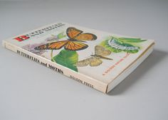 1962 Golden Nature Guide  Butterflies and by NaturalistsCupboard
