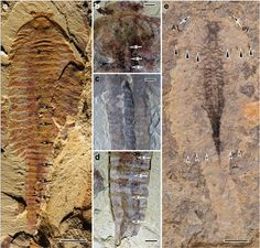 Ancient fossils reveal the amazing diversity of prehistoric life.