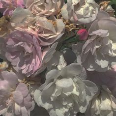 Aesthetic Images, Flower Aesthetic, Aesthetic Photo, Aesthetic Wallpapers, Where Is My Mind, No Rain, Chef D Oeuvre, Narnia, Pretty Flowers