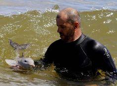 Rescatan a bebe delfin que navegaba a la deriva - Taringa!
