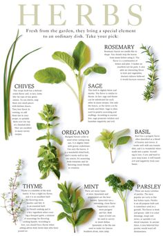 Herbs ~ These herbs a frequently used, easy to find in stores and very easy to grow. Experiment and learn to use them!