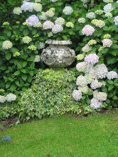 Container in hydrangea border divine exterior design garden, Hortensia Hydrangea, Hydrangea Garden, Garden Urns, Garden Gate, Hydrangeas, Moon Garden, Dream Garden, Beautiful Gardens, Beautiful Flowers