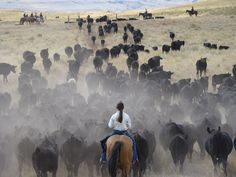 Driving cattle through Wyoming...How I want to do this ~ sleep under the stars & just see the peaceful beauty around me....