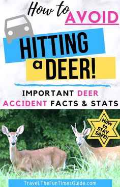 Wondering how to avoid hitting a deer (or other wildlife) when you're driving -- especially on curvy roads and at night? Follow these expert tips to avoid hitting a deer with your car! Deer collision & car accident facts. Plus ways to reduce your odds of hitting a deer while driving at night and on twisty roads. #deer #caraccidents #drivingsafety #wildlife #driving #rvtravel #traveltips