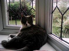 Ella's cat, Smokey looks very comfy in the window!