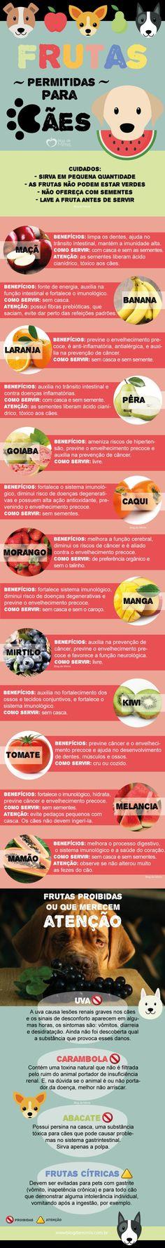 Frutas permitidas/proibidas para cães