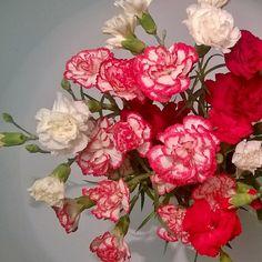 Neilikat ovat ikuisia? Yli viikko sitten ostetut kukat vaan kaunistuvat ja kertautuvat vanhetessaan.  #neilikka #perjantai #kukkia #flowers #flower #tgif #asetelma #decor