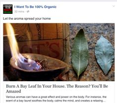 Burning bay leaves:  relaxation plus eliminating palmetto bugs!