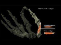 Human Family Tree, Dimensional Analysis, University Of Kent, Early Humans, Human Evolution, Archaeology News, Animal Bones, Bone And Joint, Chimpanzee