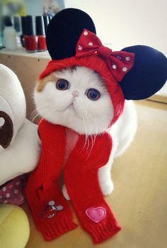 Snoopy Exotic Shorthair Cat 3