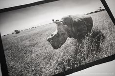 Ian Aitken | Platinum Rhinos