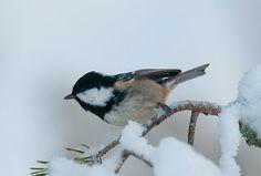 Kjartan Trana´s fotoblogg: Vinter