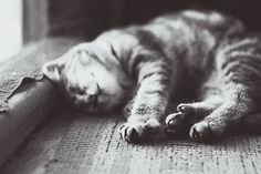 Paws by Daria S. on 500px