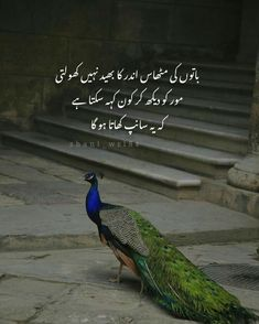Shyari Quotes, Quotes From Novels, Poetry Quotes, Qoutes, Urdu Funny Poetry, Best Urdu Poetry Images, Inspirational Quotes With Images, Inspirational Quotes About Success, Quotes Images