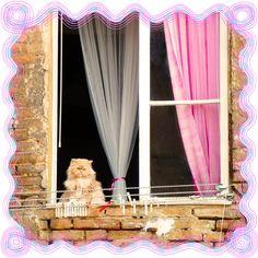 Wohin gehen wir? Immer nach Hause.  (Novalis)  #toskanareise #underthetuscansun #buchtipp #buchempfehlung #zitat #urlaubslektüre #katzenliebe #lesekatze #mystik #magie #siena #karinpachelhofer #fifalter #toteralsstein #marcellatullius #aleister Under The Tuscan Sun, 3d, Home Decor, Tuscany, Quote, Stone, Homemade Home Decor, Interior Design, Home Interiors