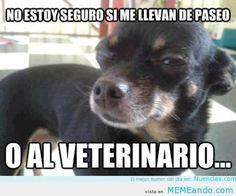 memes de perros - Buscar con Google
