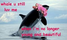 whale you still love me
