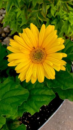 Cute Baby Puppies, Sunflower Pictures, Dandelion Recipes, Rain Photography, Good Morning Flowers, Wonderful Picture, Amazing Flowers, Yellow Flowers, Jelly