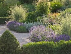 Lavendar as an elegant edging plant (also included in the article are tips for growing, care, pruning, harvesting and best cultivars for northern gardeners)