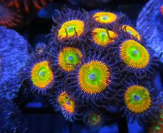 pictures of the great barrier reef australia | Stunning Photo of Reefkoi Coral in The Great Barrier Reef, Australia