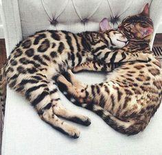 Beautiful kitties!
