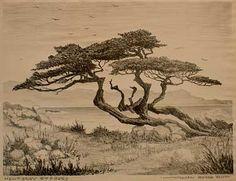 Cupressus macrocarpa - Monterey Cypress Monterey Cypress, Writing Images, Sea Tattoo, Santa Barbara California, Contemporary Landscape, Watercolor Techniques, Figure Painting, Photo Art, Moose Art