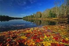 Image Search Results for Wharton State forest,NJ