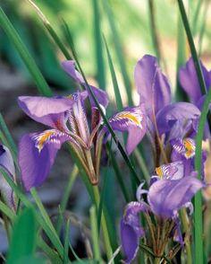 The Season's First Flowers | Fine Gardening