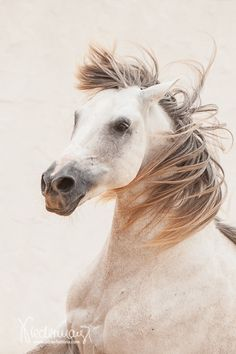 Horses In Snow, Horses And Dogs, White Horses, Animals And Pets, Most Beautiful Horses, All The Pretty Horses, Animals Beautiful, Horse Head, Horse Art