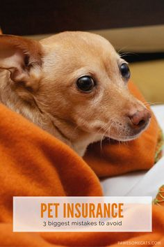 Are you considering pet insurance for your cat or dog? | 3 Biggest Mistakes People Make When Buying Pet Insurance